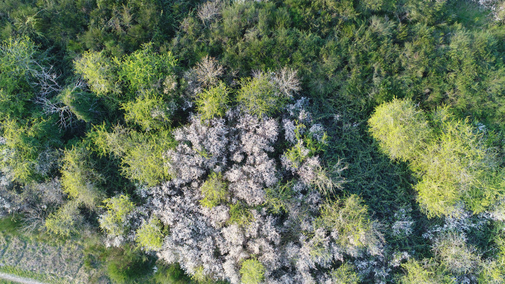 forêt vue du dessus